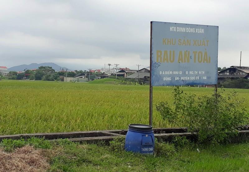 Vì một nền nông nghiệp sạch và bền vững:  Doanh nghiệp, nhà nông phải bắt tay nhau