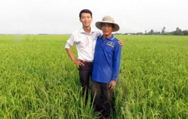 Hi vọng mới cứu cây lúa thoát nạn muỗi hành