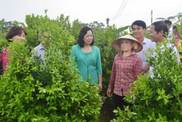 Thành ủy Hà Nội chỉ đạo: Thực hiện hiệu quả Chương trình 02