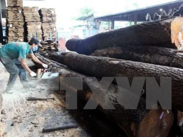 """Doanh nghiệp Việt Nam đồng loạt nói """"không"""" với gỗ bất hợp pháp"""