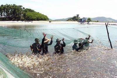 Chạy đua với thời gian để gỡ 'chốt chặn' cho tôm Việt Nam