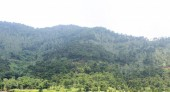 Hệ lụy khi rừng tự nhiên ngày càng co hẹp