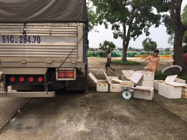 Bắt giữ xe tải vận chuyển 250kg thịt gà đang bị phân hủy, bốc mùi
