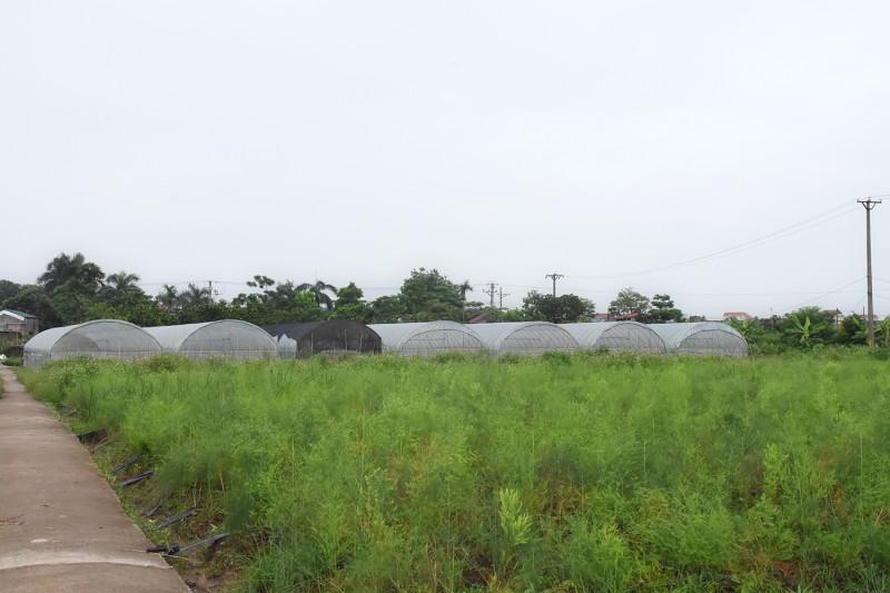 Chuyện ở huyện làm nông nghiệp công nghệ cao