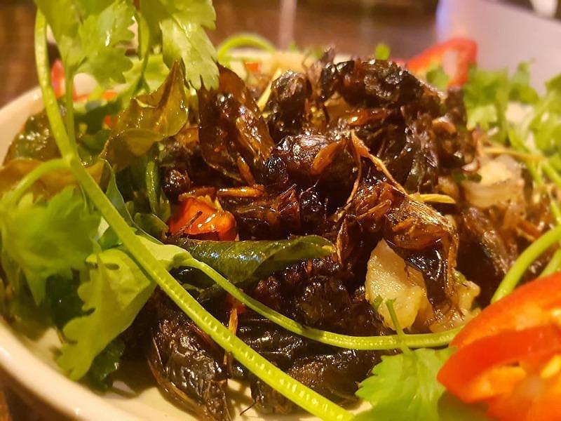 Ăn côn trùng lại rất tốt cho đường ruột?