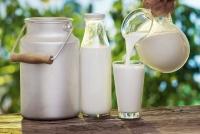 Những người không nên sử dụng sữa bò