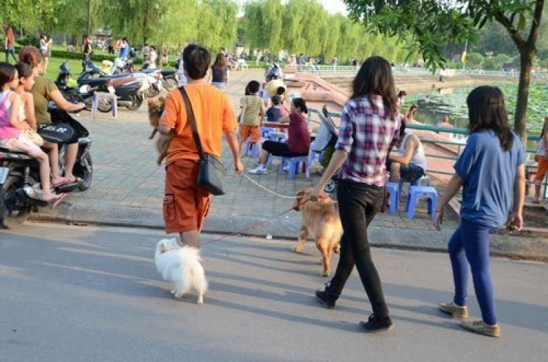 Người dân bất an vì chó thả rông: Quy định có, thực thi vẫn như không
