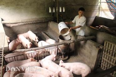 Giá heo hơi hôm nay 17/9: Giá lợn hơi tăng mức cao, người nuôi lãi đậm