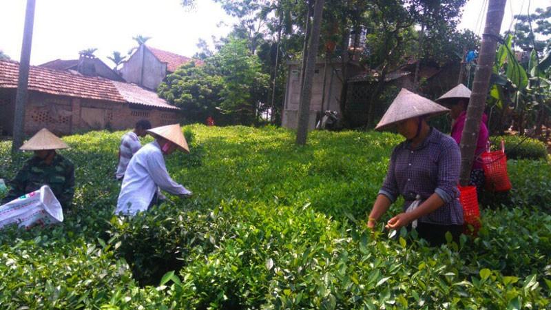 Huyện Ba Vì: Nhiều khó khăn trong xây dựng nông thôn mới