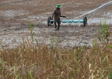 Cảnh báo hạn mặn trong sản xuất vụ lúa Đông Xuân 2018-2019