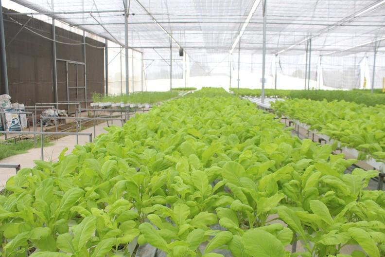 Đẩy mạnh hoạt động sản xuất nông nghiệp công nghệ cao
