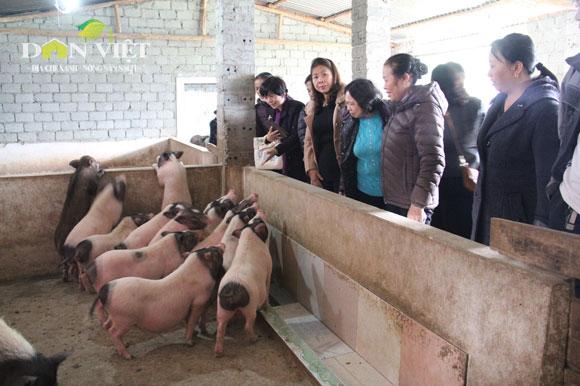 """""""Tẩm bổ"""" cho lợn bằng thảo dược"""