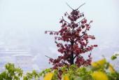 Hiện tượng thời tiết khiến Sài Gòn như hóa Sa Pa