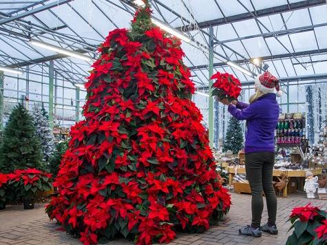 """Những cây thông Noel """"độc"""" nhất Giáng sinh 2016"""