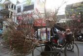 Thị trường hoa: Hồi hộp đợi Tết về