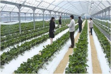 Phát triển hợp tác xã: Góp phần hạn chế lao động di cư