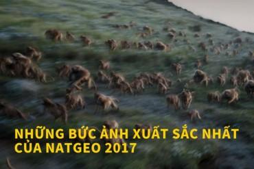 Chiêm ngưỡng những bức ảnh xuất sắc nhất của NatGeo năm 2017