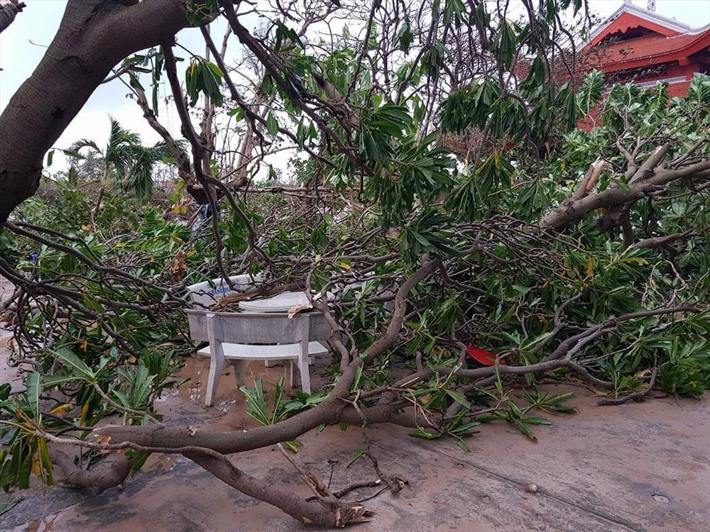 Bão Tembin băng qua Trường Sa, 90% cây cối bị gãy đổ