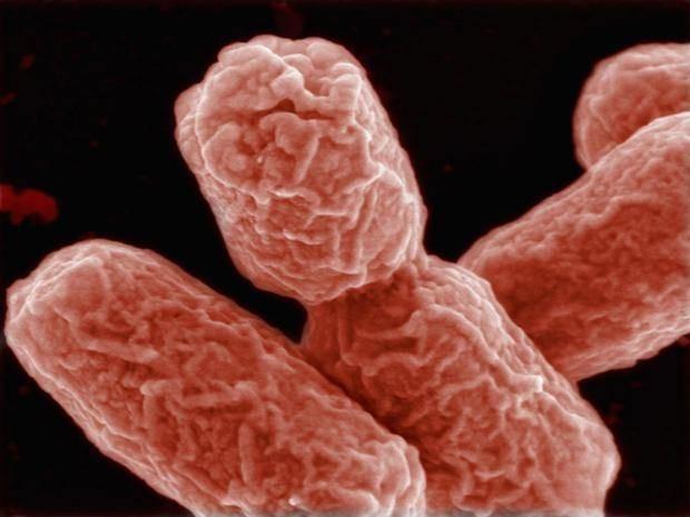 Các nhà khoa học phát hiện cách mới đột phá để chống vi khuẩn kháng kháng sinh