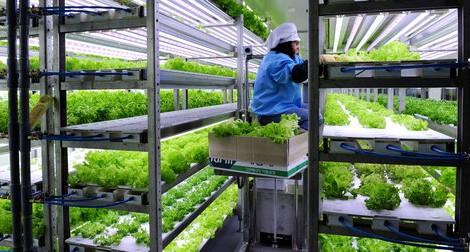 Xuất khẩu lao động Hàn Quốc: Cơ hội lớn cho lao động nghề nông