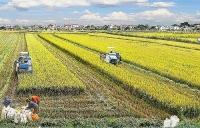 Kỳ 1: Sức sống mới trên những miền quê