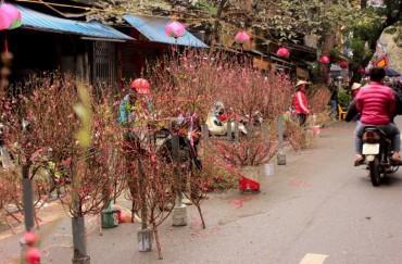 Chợ hoa Tết rực rỡ sắc Xuân