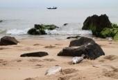 Đề xuất hỗ trợ ngư dân vùng cá chết được vay vốn theo NĐ67