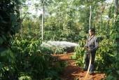 Sáng kiến tiết kiệm nước trên vườn cà phê