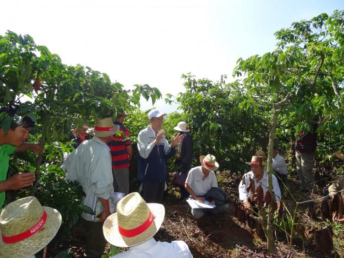 Dự án Nescafé Plan giúp nông nhân nâng cao thu nhập