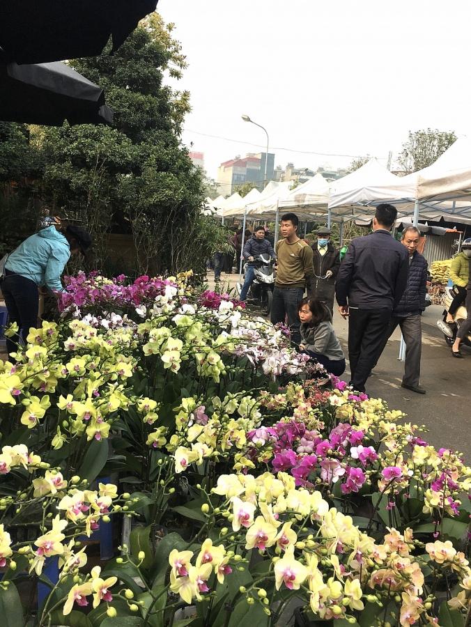 Chợ hoa Vạn Phúc rộn ràng vào Xuân