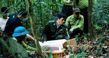 Tái thả động vật hoang dã sau cứu hộ