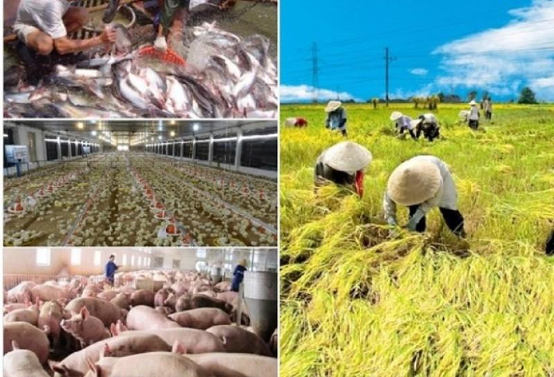 Kỳ cuối: Hướng đi phù hợp nào cho nông nghiệp nước nhà?