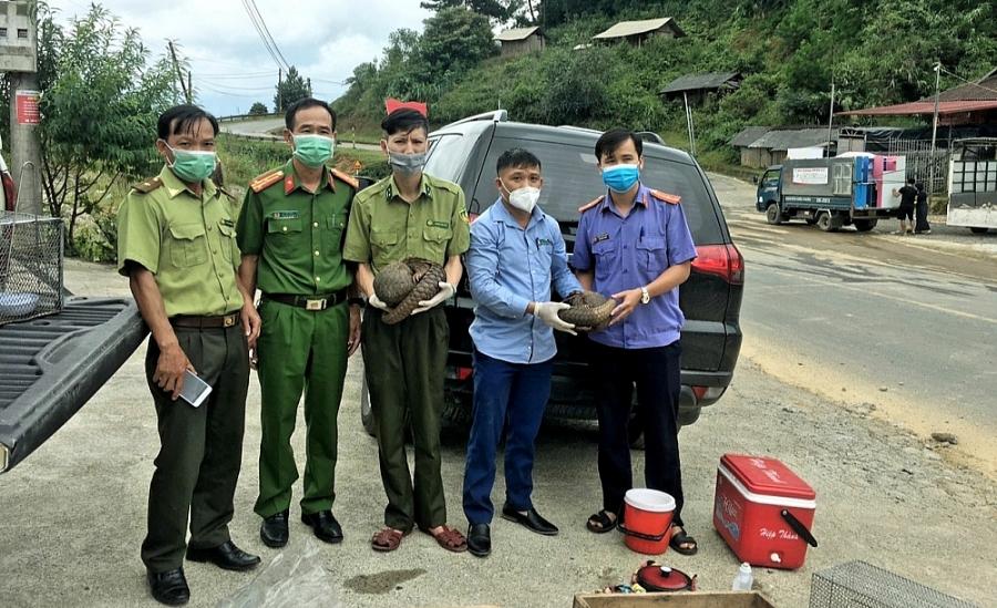 Đội Cứu hộ tiếp nhận 2 cá thể Tê tê từ đại diện Phòng  Cảnh sát Kinh tế, công an tỉnh Điện Biên