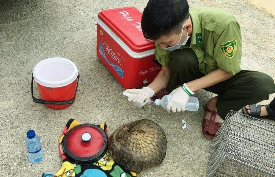 Chăm sóc động vật ban đầu tại nơi tiếp nhận