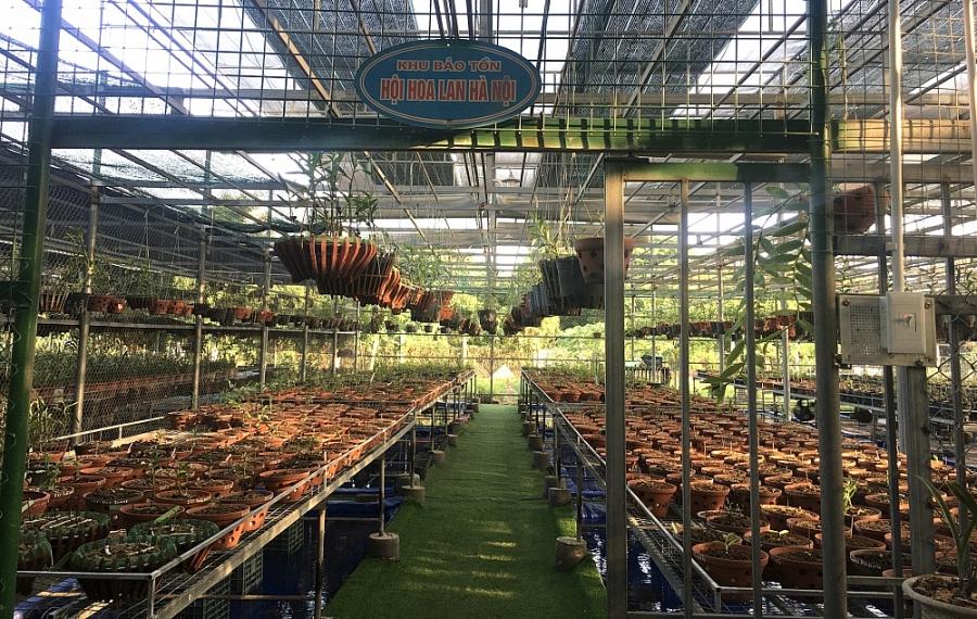 Vườn lan Tấn Phong của nghệ nhân - doanh nhân Nguyễn Huy Tấn, nơi lưu giữ và bảo tồn nhiều giống lan quý của Việt Nam
