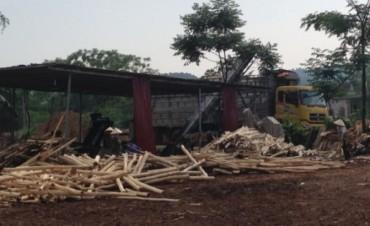 Thanh Hóa: Xử lý các cơ sở băm dăm gỗ không phép