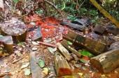Kiểm lâm Thanh Hóa báo cáo kiểm tra vụ phá rừng ở Pù Luông