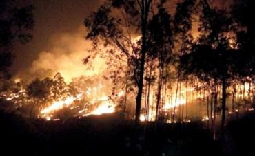 Nắng nóng Thanh Hóa lại xảy ra cháy rừng