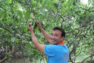 Bưởi Quế Dương, giống cây đổi đời cho người nông dân