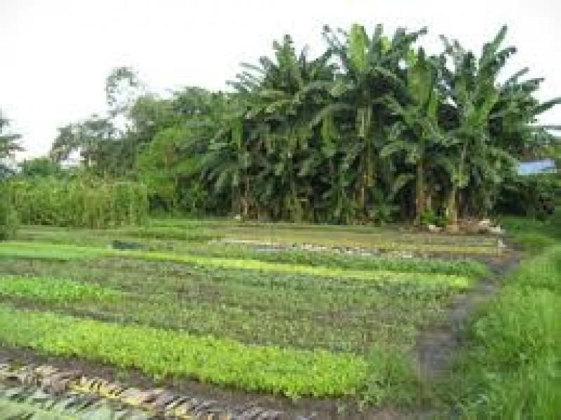 Chuyển mục đích sử dụng đất tại 2 tỉnh
