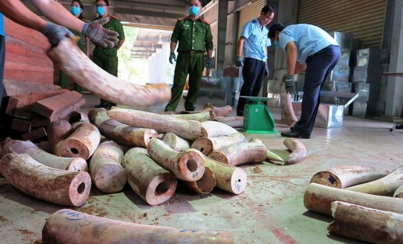 Khẩn trương điều tra mở rộng vụ án vận chuyển trái phép ngà voi vào Việt Nam