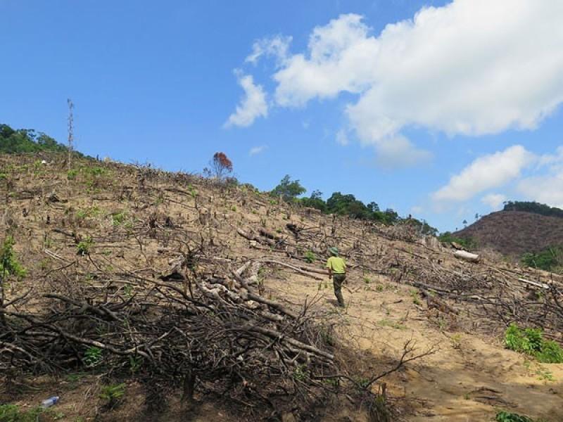 Chấn chỉnh tình trạng phá rừng, khai thác cát, sỏi trái phép