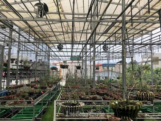 Hành vi phạm pháp liên quan đến mua bán lan đột biến: Tổ chức Công đoàn khuyến cáo người lao động
