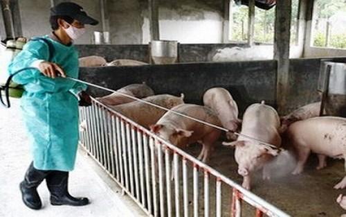Hỗ trợ các địa phương phòng chống dịch bệnh động vật