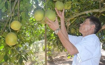 Huyện Mỹ Đức đẩy mạnh phát triển sản xuất nông nghiệp
