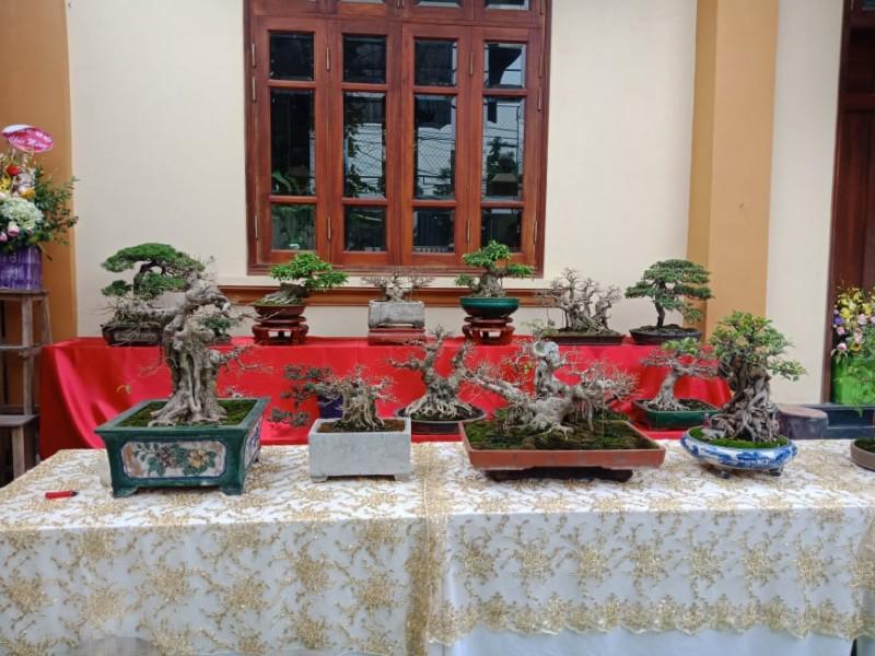 doc dao trien lam bonsai mini phong cach duong dai