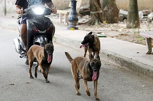 Chó thả rông, chủ sẽ phải chịu trách nhiệm