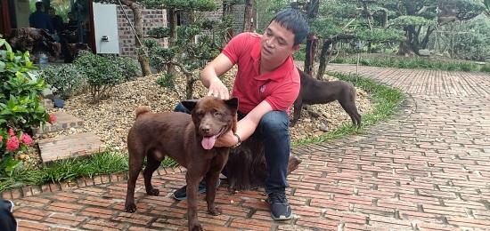 Xem xét việc cấp giấy chứng nhận cho giống chó bản địa
