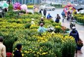 Quận Bắc Từ Liêm tổ chức 5 địa điểm chợ hoa Xuân