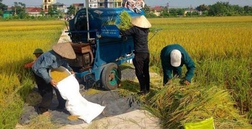 Cho vay thu mua thóc, gạo vụ Đông Xuân năm 2019